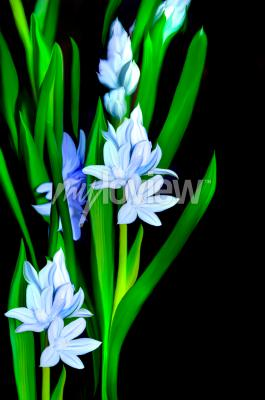 Fototapeta Lazurowe Kwiaty