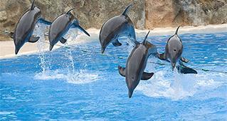 Delfíni