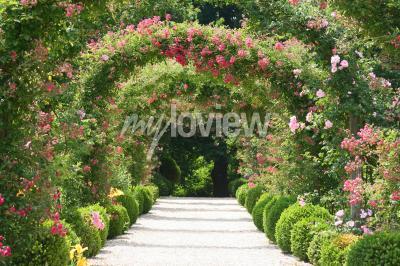 Fototapeta Rose Arch V zahradě