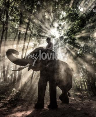 Obraz Mahut na Surin Province Thajsku slon