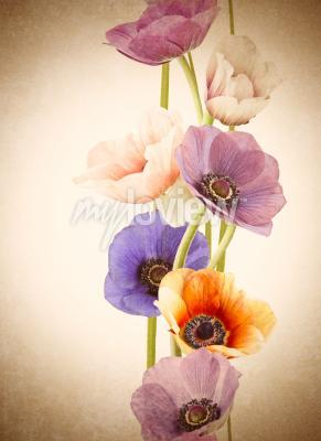 Fototapeta Čerstvé barevné květiny máku