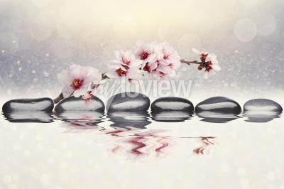 Fototapeta Růžová orchidej