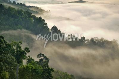 Fototapeta Mlhavá mlha na hoře v tropickém lese