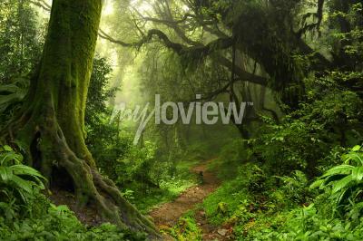 Fototapeta Tropický deštný prales