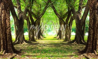 Fototapeta Kouzelný lesní zeleň