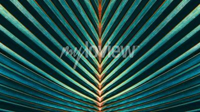 Fototapeta Pruhované palmové listy