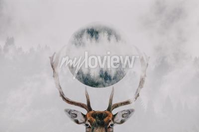 Fototapeta Double exposure of an antler and forest