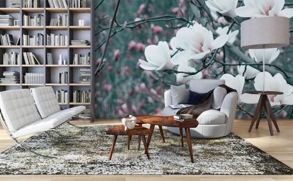 Fototapeta bílé květy magnolie