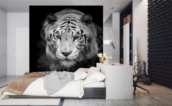 fototapeta černo-bílý tygr