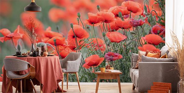Fototapeta červené květiny