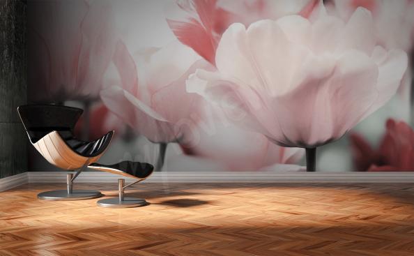 Fototapeta hlavičky tulipánů