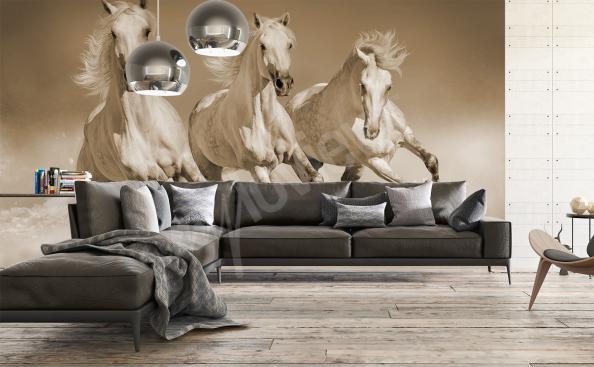 Fototapeta koně na zeď