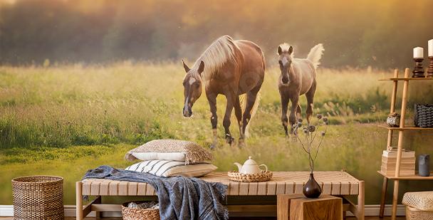 Fototapeta koně při západu slunce