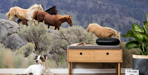 Fototapeta koně ve cvalu