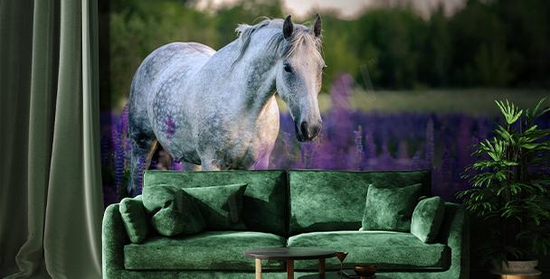 Fototapeta kůň na levandulovém poli