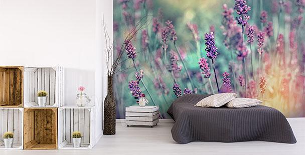 Fototapeta květy levandule