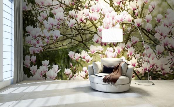 Fototapeta magnolie v zahradě