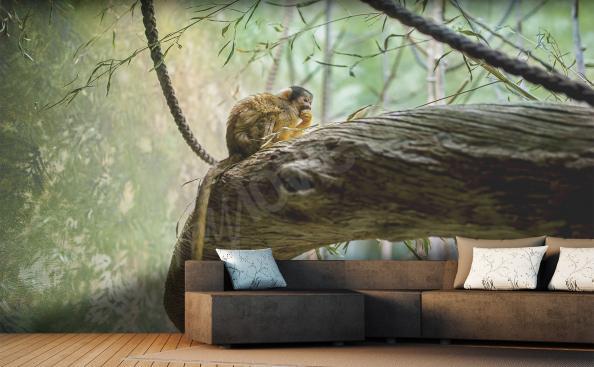 Fototapeta opice na stromě