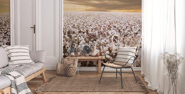 Fototapeta pěstování bavlny