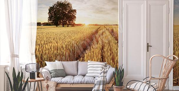 Fototapeta pšeničná pole
