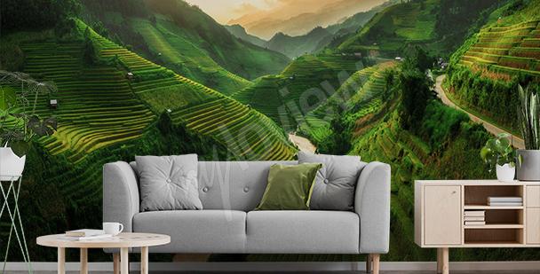 Fototapeta rýžové pole