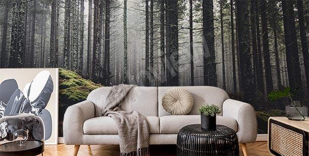 Fototapeta zamlžený les