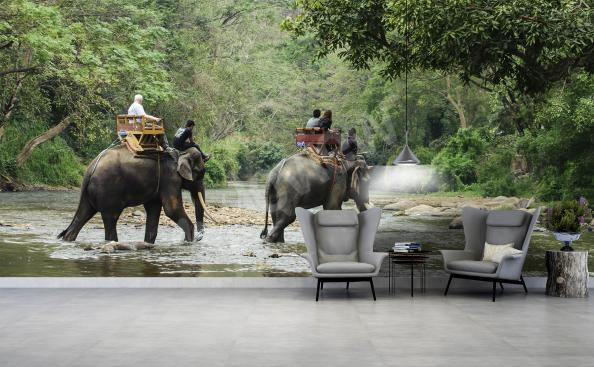 Fototapeta zvířata sloni