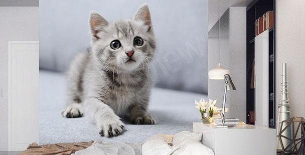 Obraz bílá kočka do ložnice
