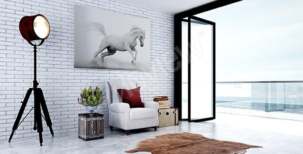 Obraz bílý kůň