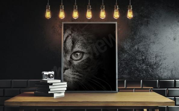 Obraz Černá Kočka