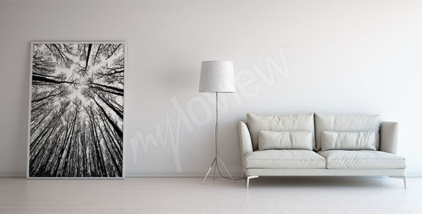 Obraz černobílé stromy