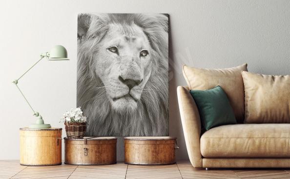 obraz černobílý lev