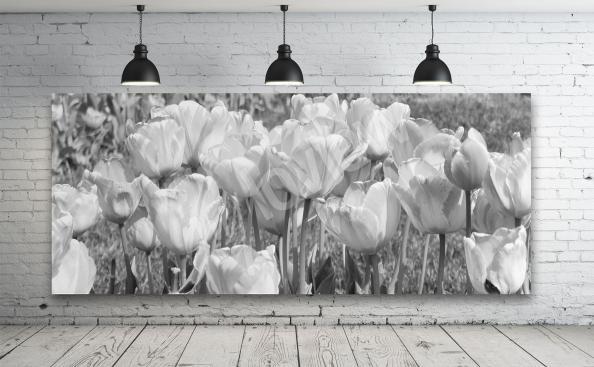 Obraz černobílý tulipány