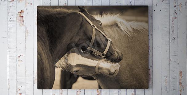 Obraz černý a bílý kůň