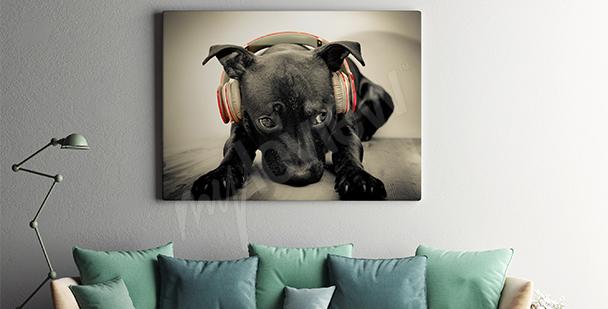 Obraz černý pes