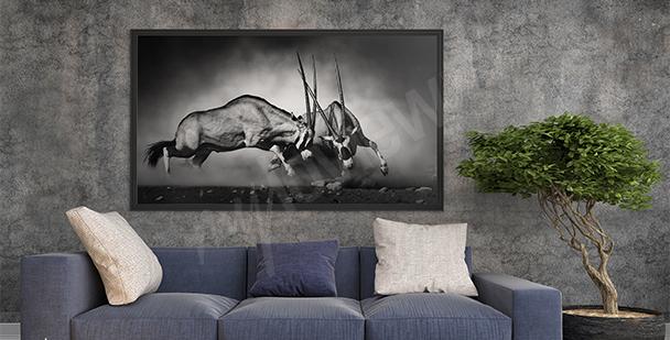 Obraz divoká zvířata