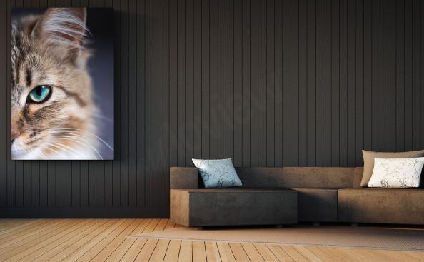 obraz kočka do obývacího pokoje
