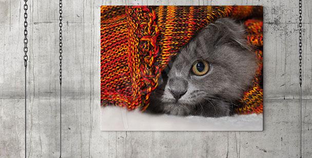 Obraz kočka do předsíně