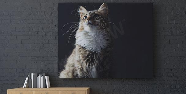 Obraz kočka na černém pozadí