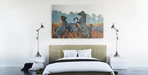 Obraz koně na louce