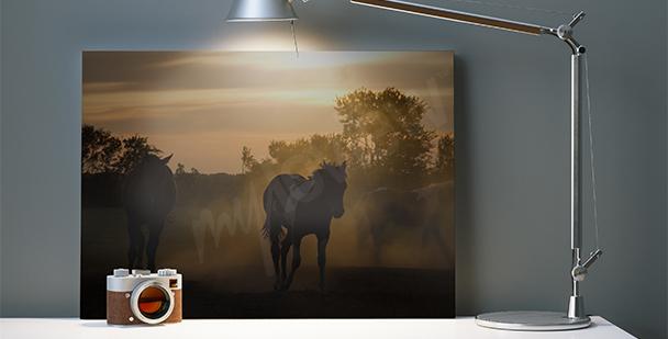 Obraz koně při západu slunce
