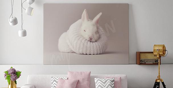 Obraz králík do obývacího pokoje