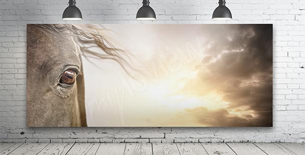 Obraz kůň a mraky