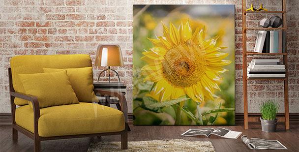 Obraz květ slunečnice