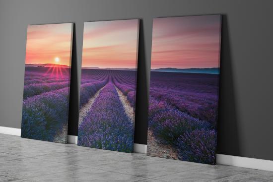 Obraz lavendule - západ slunce