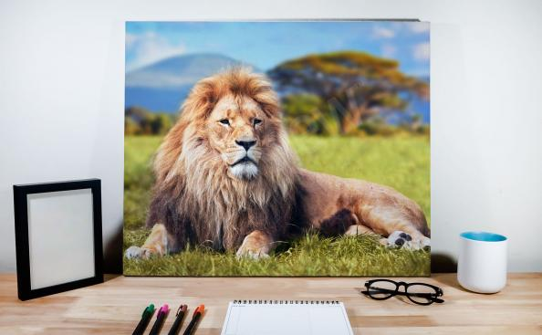 obraz lev na pozadí