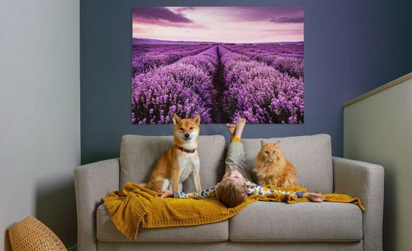 Obraz levandule v obývacím pokoji