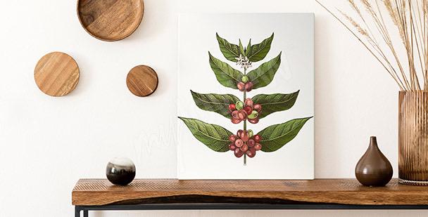 Obraz listí kávovníku