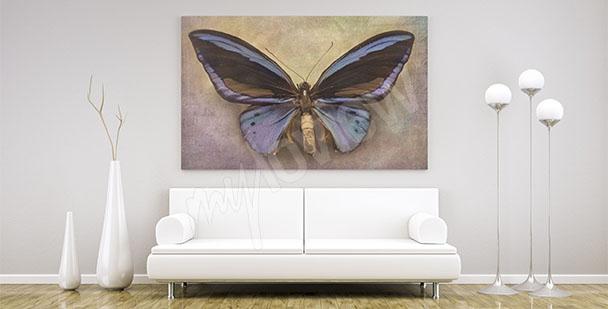 Obraz minimalistický motýl