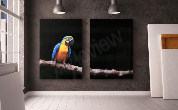 Obraz papoušek